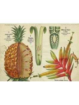 Thé vert Douceur Ananas