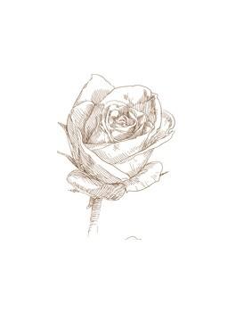 Noir de Rose