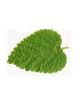 Mélisse feuilles 40g BIO