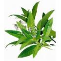 Verveine odorante feuilles 35g BIO