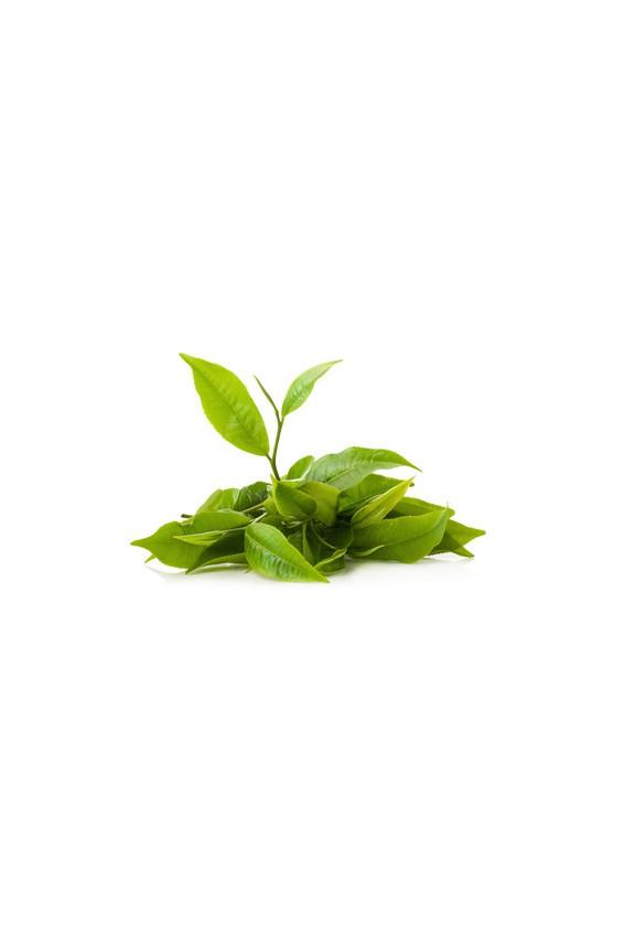 Thés verts : 8 échantillons de 10g