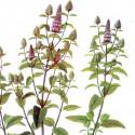 Menthe poivrée feuilles 40g BIO