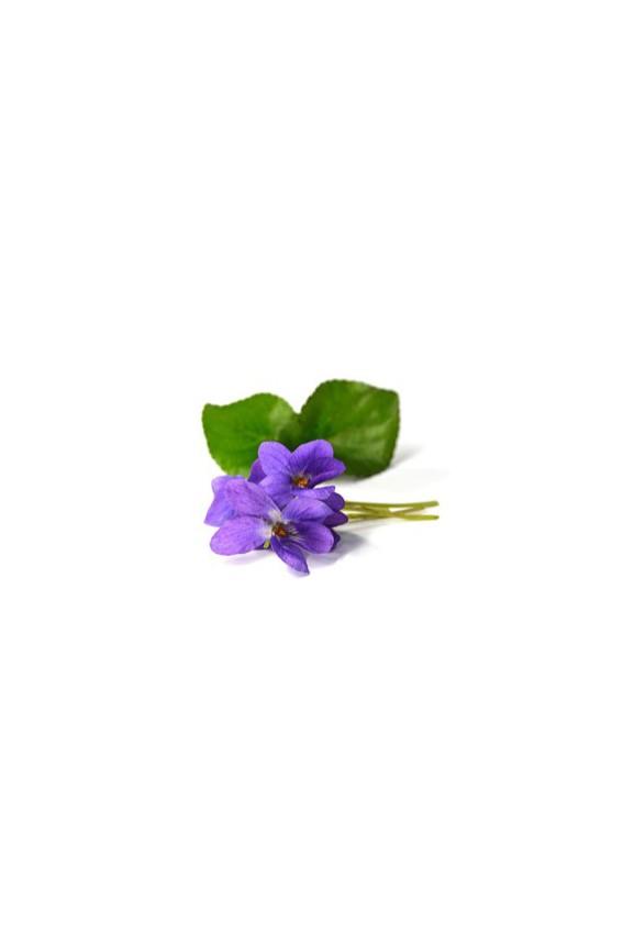 Thé vert violette fleurs