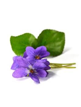 Thé vert violette fleurs Bio*