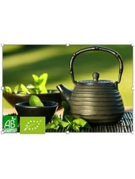 Thé vert nature Sencha Chine Bio*