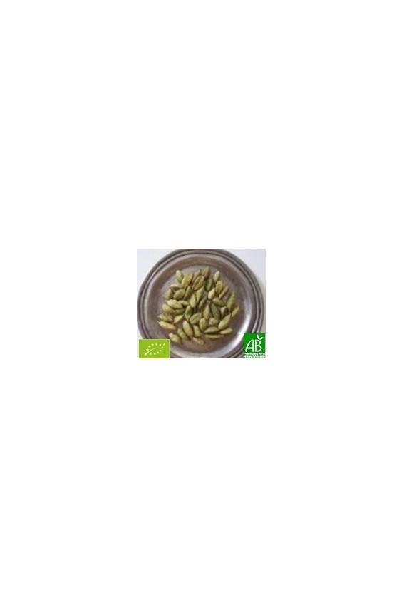 Cardamome graines entères 35g Bio