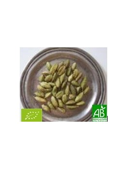 Cardamome graines entères 35g Bio