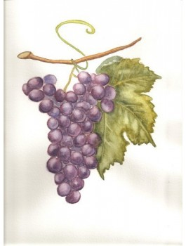 Thé du grand vignoble ( thé noir raisin) 80g