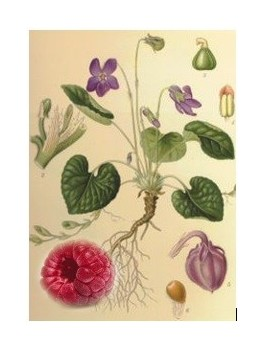 Rooibos Amour de violette