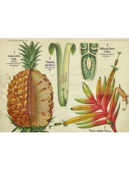 Thé vert Douceur Ananas Bio*