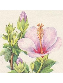Hibiscus fleurs ou Karkadé 80g BIO