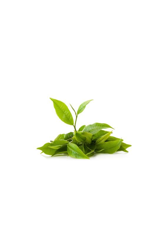 """Thé vert """"Concentré Matcha Santé"""" 75g Bio"""