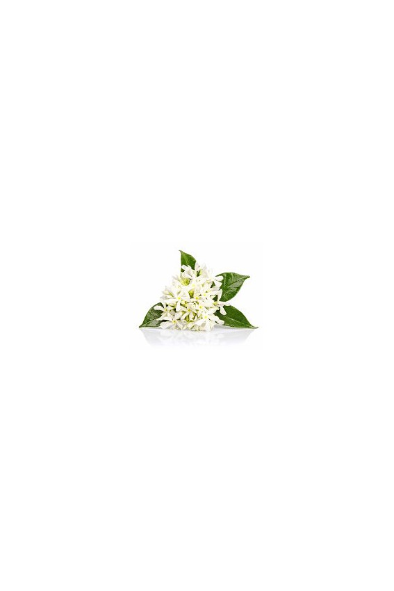 Eternel Néroli oolong fleur d'oranger 80g